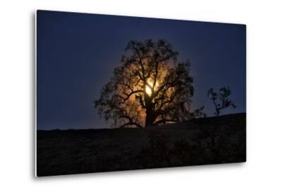 Moonrise and Tree Silhouette, Big Sur, California-Keith Ladzinski-Metal Print