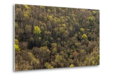 The Bald River Proposed Wilderness in Tennessee's Cherokee National Forest-Michael Melford-Metal Print