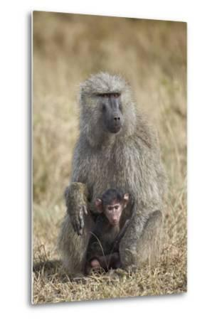 Olive Baboon (Papio Cynocephalus Anubis) Infant and Mother-James Hager-Metal Print