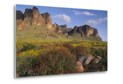 Wildflowers and Cliffs in Desert-DLILLC-Metal Print