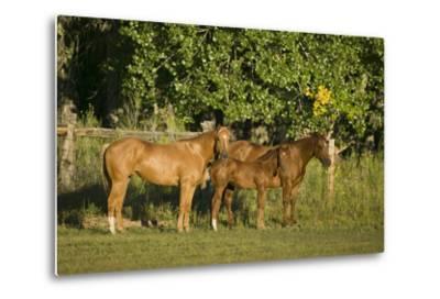 Three Quarter Horses Together in the Pasture-DLILLC-Metal Print