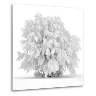 Not just white-Philippe Sainte-Laudy-Metal Print