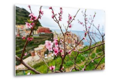 Spring Blooming Cherry Tree with Background Scenic View of Colorful Houses of Manarola Village, Cin-BlueOrange Studio-Metal Print