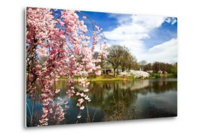 The Cherry Blossom Festival in New Jersey-Gary718-Metal Print