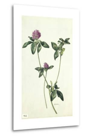 A Painting of a Sprig of Red Clover-Mary E. Eaton-Metal Print
