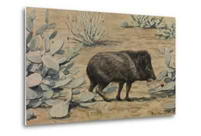 A Painting of a Collared Peccary, also known as a Muskhog, Eating-Louis Agassi Fuertes-Metal Print