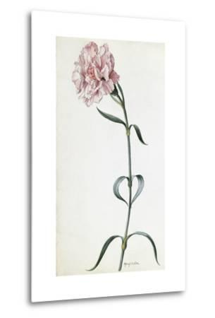 A Painting of a Sprig of Pink Carnation-Mary E. Eaton-Metal Print