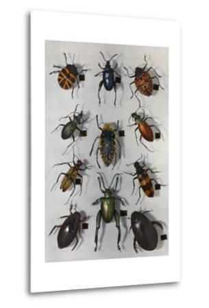 Collection of Various Beetles-Edwin L^ Wisherd-Metal Print