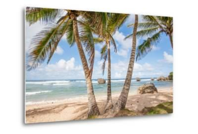 The Palm Lined Beach at Bathsheba-Matt Propert-Metal Print