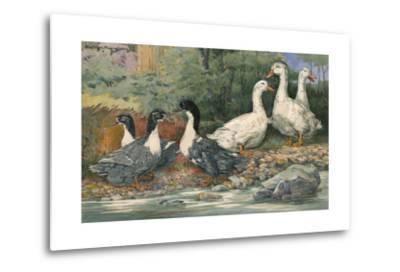 A Painting of Blue Swedish Ducks and Aylesbury Ducks-Hashime Murayama-Metal Print