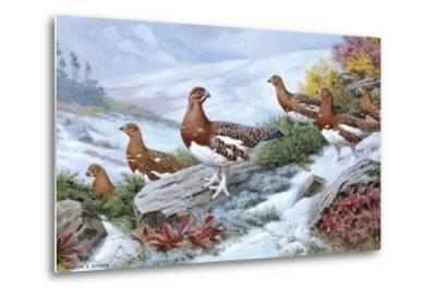 Willow Ptarmigans in Summer Plumage Leave Thicket to Search for Food-Walter A. Weber-Metal Print