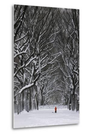 A Person under a Canopy of Snow Laden Trees in Central Park-Kike Calvo-Metal Print