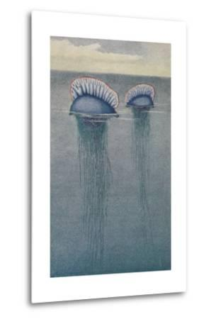 A Painting of Two Jellyfish known as the Portuguese Man-Of-War-Hashime Murayama-Metal Print