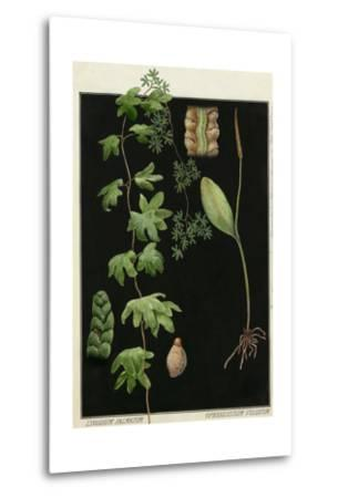 Painting of Southern Adderstongue and American Climbing Fern-E.J. Geske-Metal Print