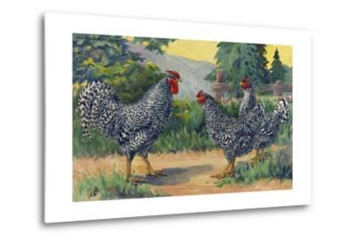 The Dominique Breed Was Named in a U.S. Poultry Show in 1849-Hashime Murayama-Metal Print