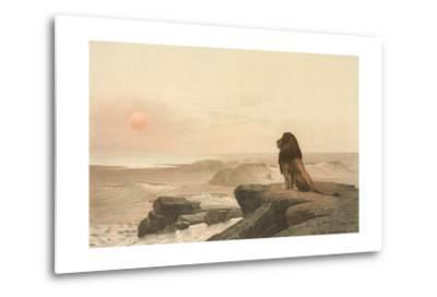Lion Watching Sunset--Metal Print