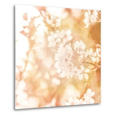 Picture of Beautiful Apple Tree Blossom-Anna Omelchenko-Metal Print