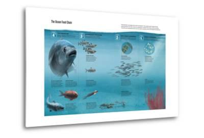 The Ocean Food Chain; Predators, Consumers and Producers-Hernan Canellas-Metal Print