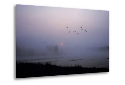 Canada Geese Fly over Alum Creek at Dawn-Tom Murphy-Metal Print