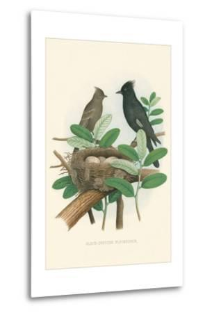 Black-Crested Flycatcher--Metal Print