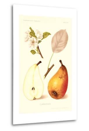 Clairgeaus Pears--Metal Print