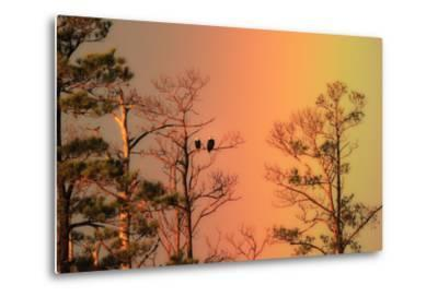 A Pair of Bald Eagles, Haliaeetus Leucocephalus, Illuminated by a Rainbow While Perched in a Tree-Robbie George-Metal Print