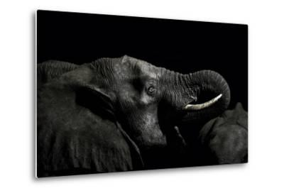 An African Elephant Emerges from the Dry Season Darkness to Drink at a Waterhole-Jason Edwards-Metal Print