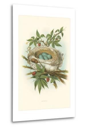 Catbird Nest and Eggs--Metal Print