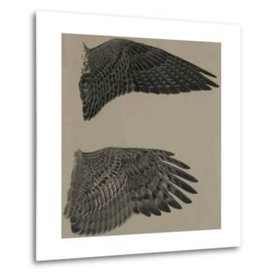 An Image of the Wings of a Falcon (Top) and a Goshawk Hawk (Lower)-Louis Agassi Fuertes-Metal Print