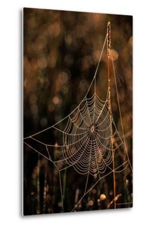 Dew on a Spider Web-Tom Murphy-Metal Print
