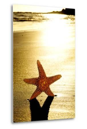 Seastar on the Shore of a Beach at Sunset-nito-Metal Print
