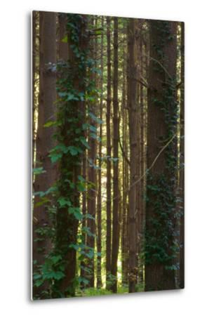 Treetrunks in Cataract Falls State Park forest, Indiana, USA-Anna Miller-Metal Print