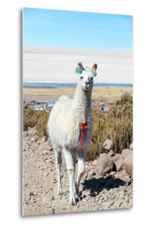 Llama with Uyuni Salt Flats-jkraft5-Metal Print