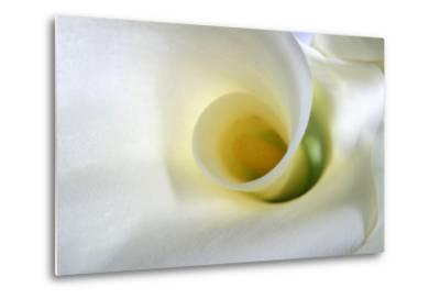 White Calla Lily Abstract-Anna Miller-Metal Print