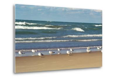 Flock of seaguls on the beaches of Lake Michigan, Indiana Dunes, Indiana, USA-Anna Miller-Metal Print