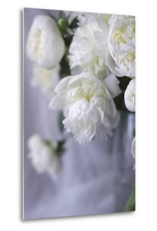 White Peonies in a Vase-Anna Miller-Metal Print