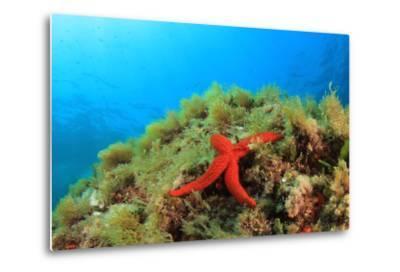 Starfish Underwater on Reef-Rich Carey-Metal Print