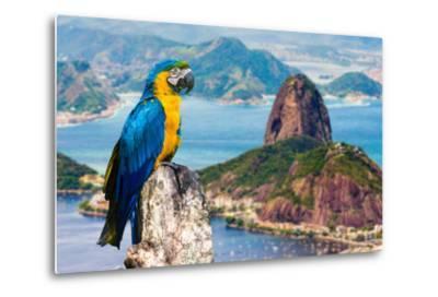 Blue and Yellow Macaw in Rio De Janeiro, Brazil-Frazao-Metal Print