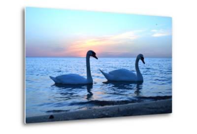 Swans-lindama-Metal Print