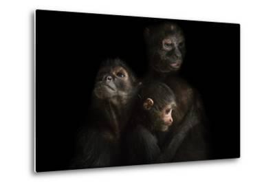 Critically Endangered Robust Black Spider Monkeys, Ateles Fusciceps Robustus-Joel Sartore-Metal Print