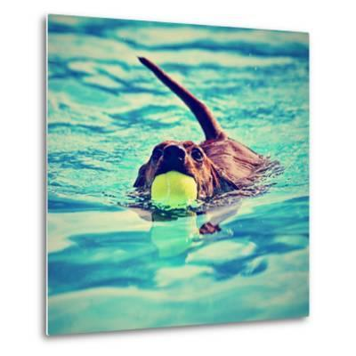 A Dachshund with a Ball in His Mouth-graphicphoto-Metal Print