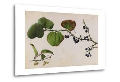 A Sprig of Roundleaf Greenbrier Shrub Blossoms and Berries-Mary E. Eaton-Metal Print