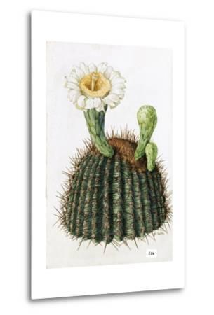 A Painting of a Saguaro Cactus and its Blossom-Mary E. Eaton-Metal Print