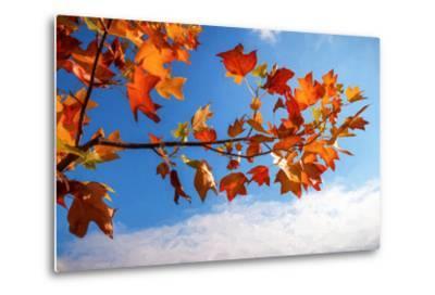 Autumn Colors-Philippe Sainte-Laudy-Metal Print