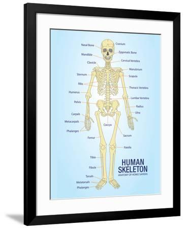 Human Skeleton Anatomy Anatomical Chart Poster Print--Framed Poster