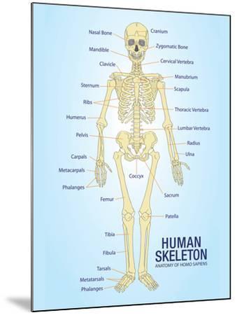 Human Skeleton Anatomy Anatomical Chart Poster Print--Mounted Poster