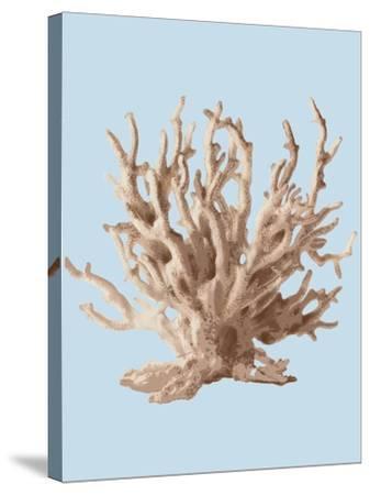 Coral II-Sloane Addison ?-Stretched Canvas Print