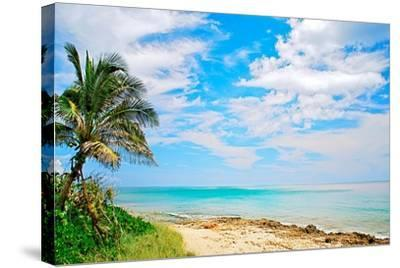 Paradise-Gail Peck-Stretched Canvas Print