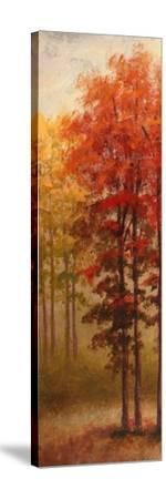 Fall Trees II-Michael Marcon-Stretched Canvas Print