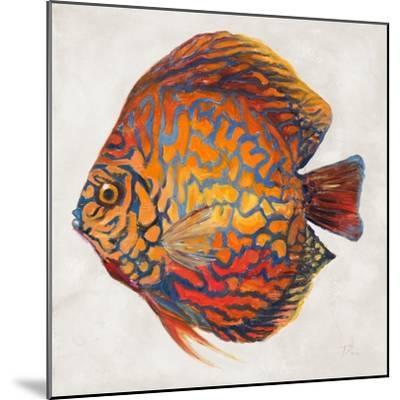 Little Fish II-Patricia Pinto-Mounted Premium Giclee Print